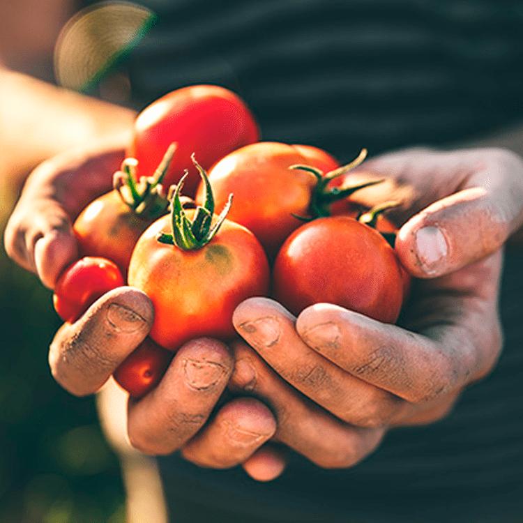 tomatensaus thumbnail